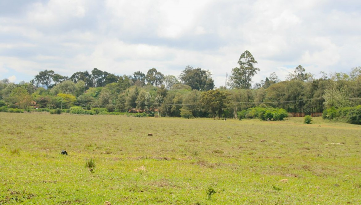 Reasons why you should invest in land